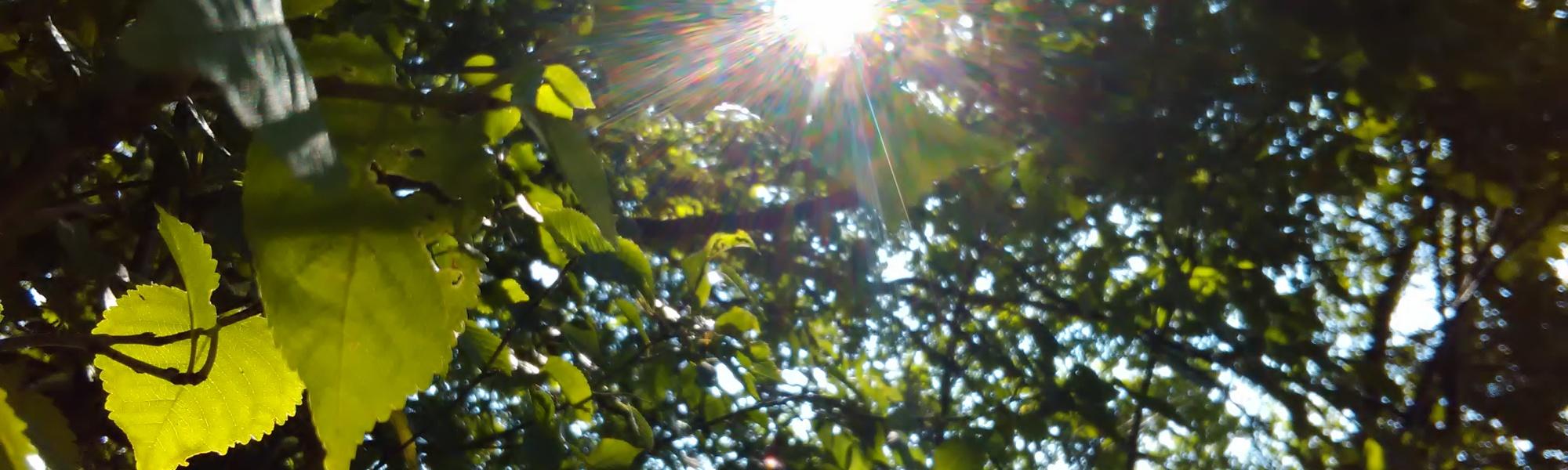 Blätterdach-Sonne